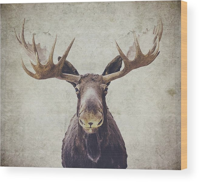 Moose Wood Print featuring the photograph Moose by Nastasia Cook