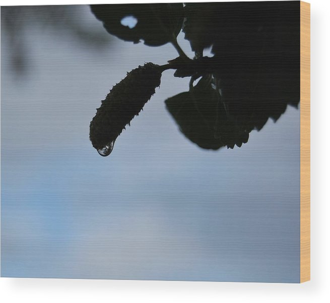 Raindrop Wood Print featuring the photograph Raindrop Silhouette by Marilynne Bull