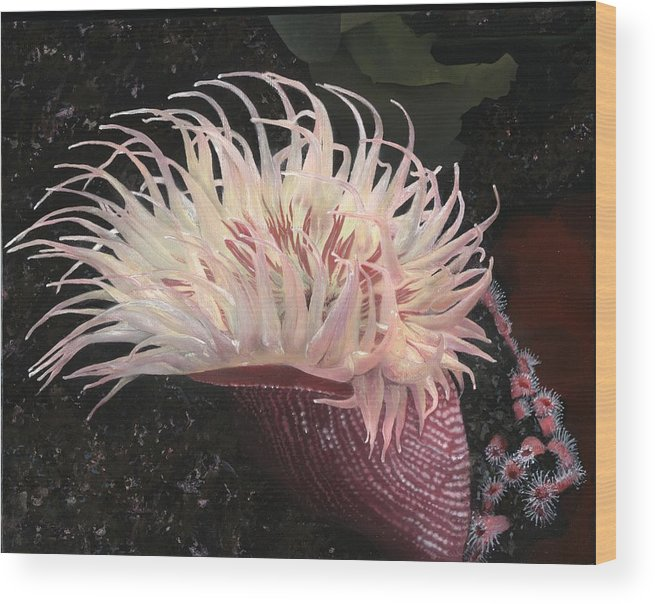 Anemone. Sea Anemone Wood Print featuring the painting Sea Anemone by Charles Parks