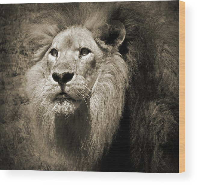Lion Wood Print featuring the photograph The King II by Steven Sparks