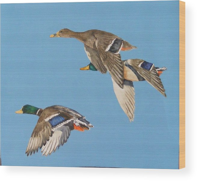 Blue Wood Print featuring the painting Three mallards by Diane Ziemski