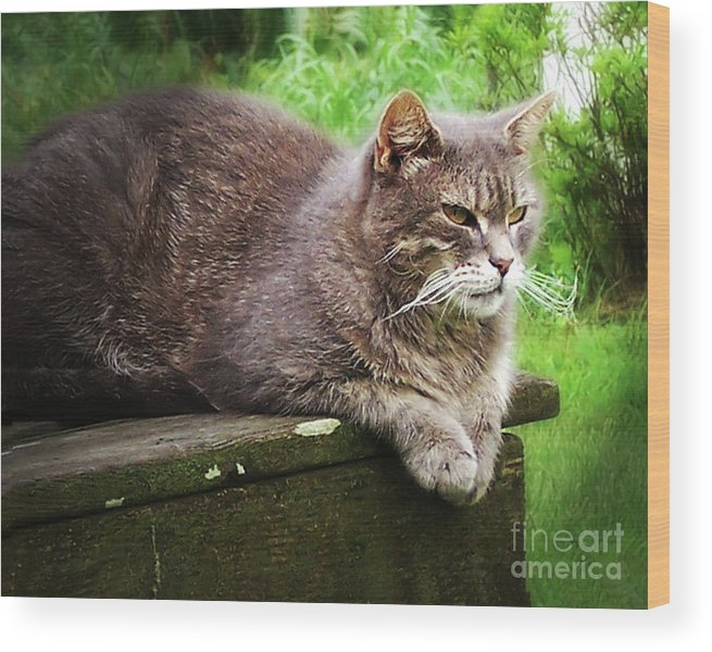 Cat Wood Print featuring the photograph Top Cat by Pete Hellmann