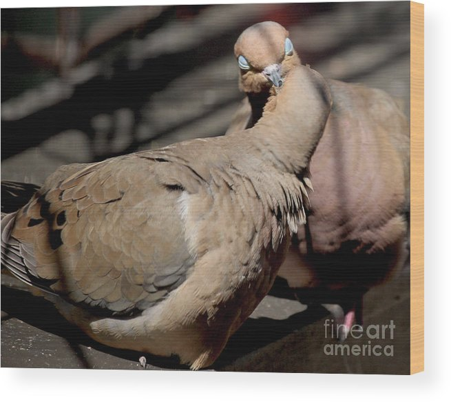 Female Mourning Dove Wood Print featuring the photograph Cooing Mourning Doves 1 by Patricia Youngquist