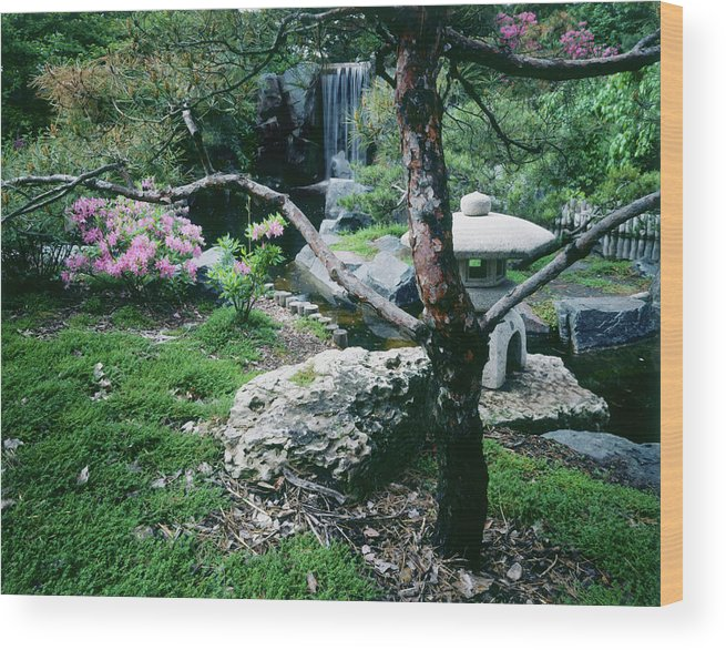 Flowerbed Wood Print featuring the photograph Japanese Garden, U Of Mn Landscape by Lawrencesawyer