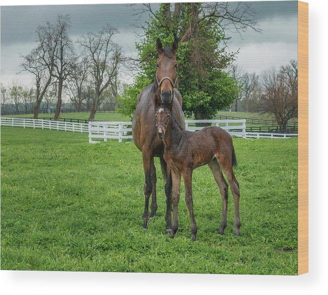 Horses Wood Print featuring the photograph Mare And Foal 2 by Galloimages Online