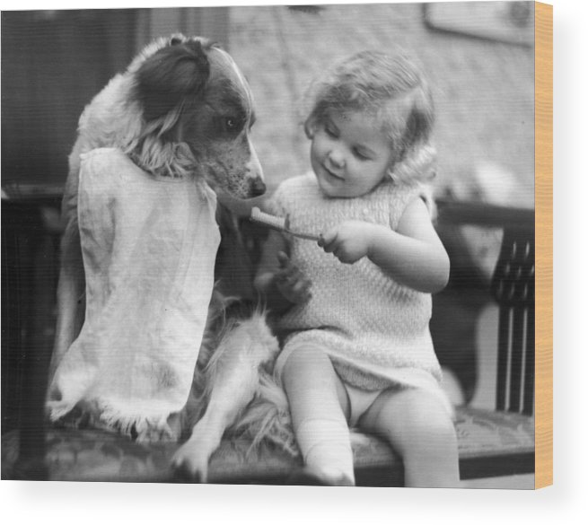 Toddler Wood Print featuring the photograph Toddler Trying To Brush Dogs Teeth. P by Time Life Pictures