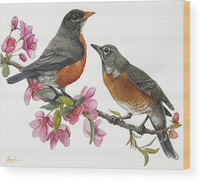 American Robins Wood Print featuring the painting American Robins State Bird Original Wildlife Watercolor by Linda Apple