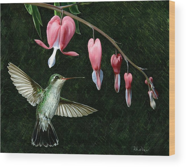 Hummingbird Wood Print featuring the drawing Bleeding Heart Humming by Brent Ander