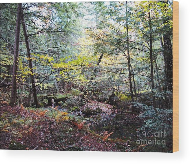 Autumn Wood Print featuring the photograph Autumn Woods by Linda Marcille