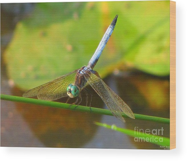 Dragonfly Wood Print featuring the photograph Dragonfly by Rrrose Pix