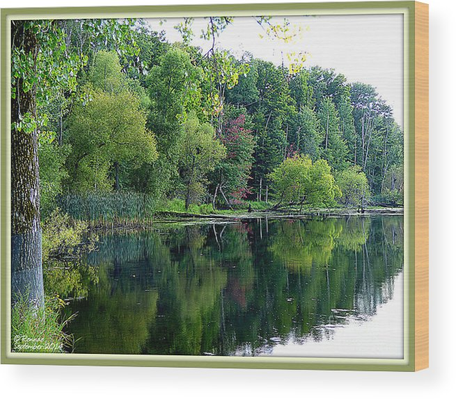 Landscape Wood Print featuring the photograph Almost Fall by Rennae Christman