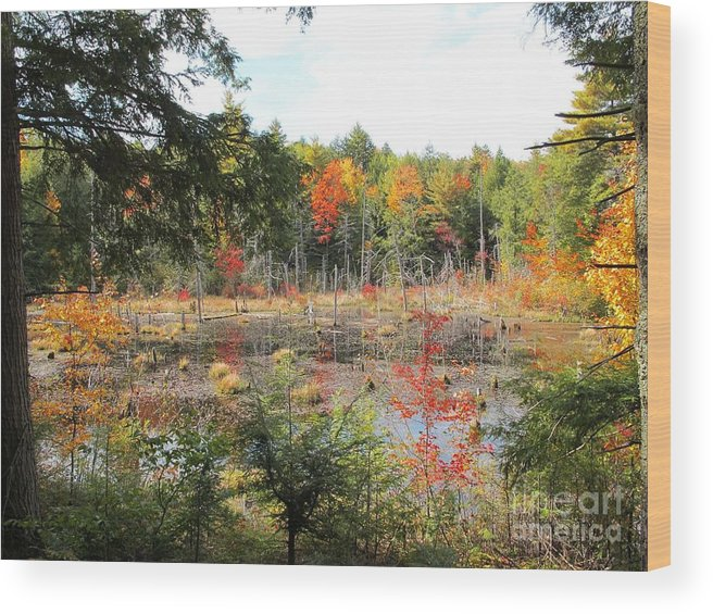 Autumn Wood Print featuring the photograph Autumn Wetlands by Linda Marcille