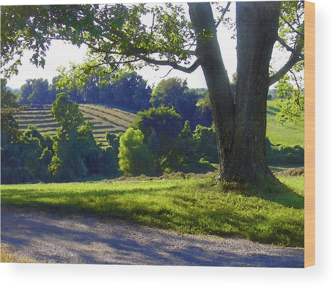 Landscape Wood Print featuring the photograph Country Landscape by Steve Karol