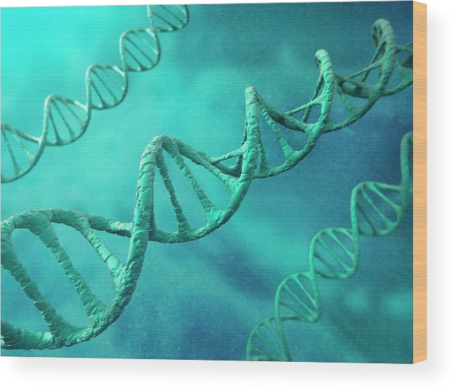 Color Image Wood Print featuring the digital art Dna Molecules, Artwork by Science Photo Library - Andrzej Wojcicki