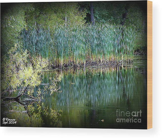 Landscape Wood Print featuring the photograph Edge Of Reflections by Rennae Christman