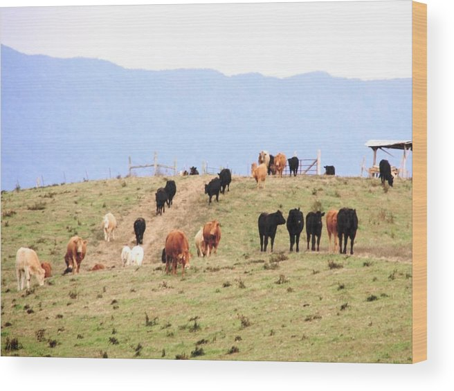 Landscape Wood Print featuring the photograph Feeding Time by Cumberland Studios