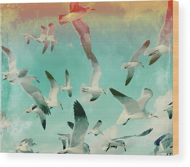 Animal Themes Wood Print featuring the photograph Flock Of Seagulls, Miami Beach by Michael Sugrue