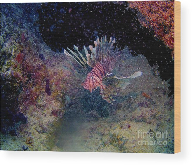 Ocean Wood Print featuring the photograph Lion Fish on The Reef by Randy Sprout