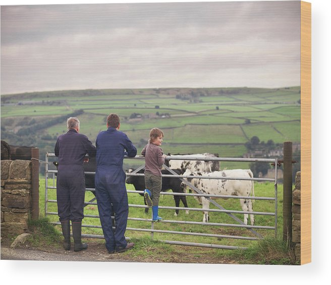 Mature Adult Wood Print featuring the photograph Mature Farmer, Adult Son And Grandson by Monty Rakusen