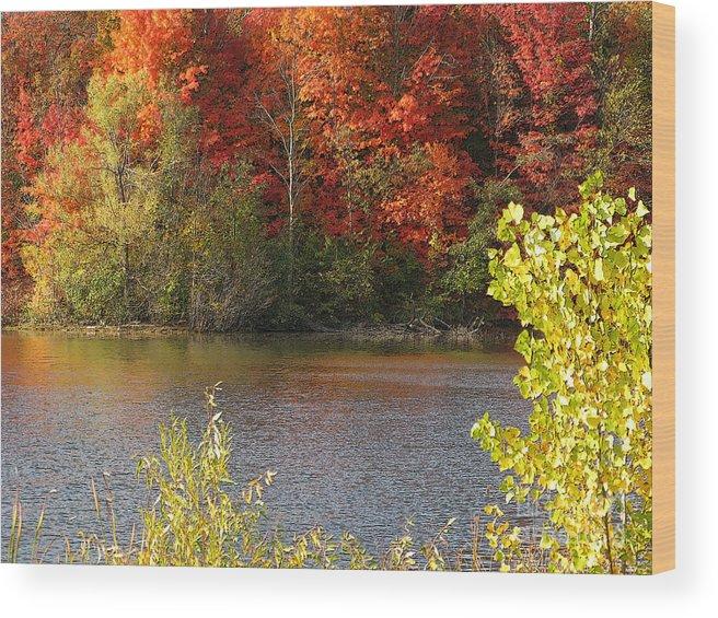 Autumn Wood Print featuring the photograph Sunlit Autumn by Ann Horn