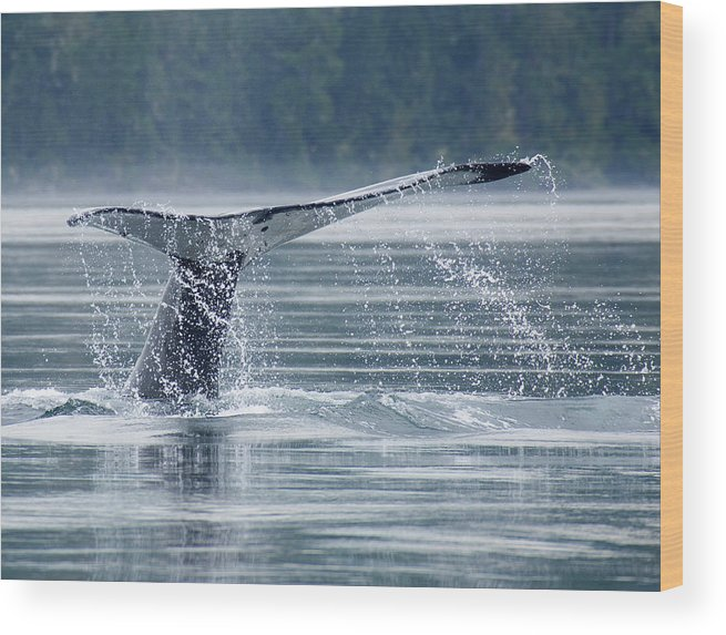One Animal Wood Print featuring the photograph Tail Of Humpback Whale by Grant Faint