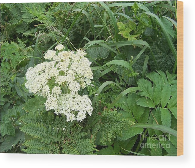 White Flower Wood Print featuring the photograph Beauty by Margie Byrne