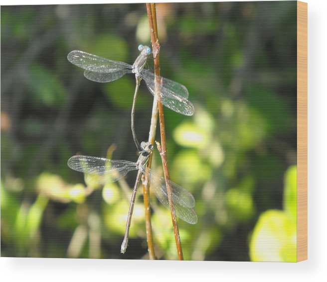 Dragonflies Wood Print featuring the photograph Dragonflies by Paulina Roybal