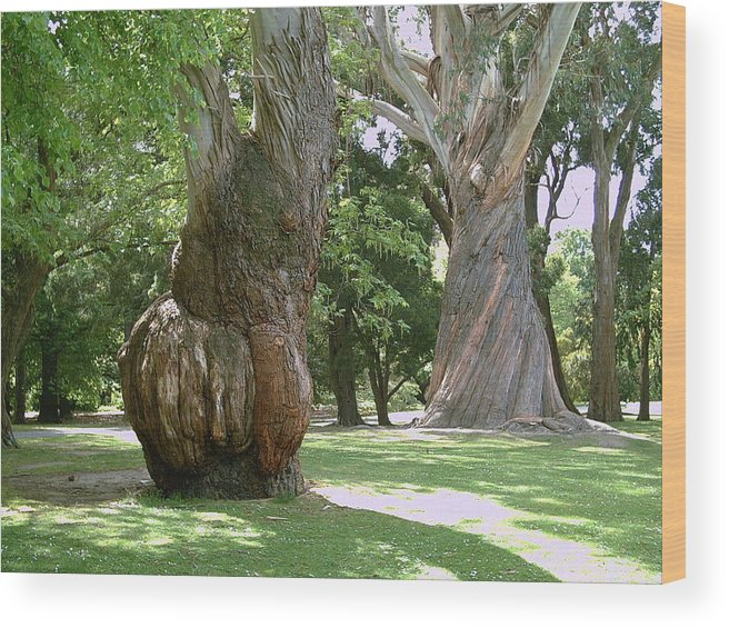 Gum Trees Wood Print featuring the photograph Gum Trees by Joyce Woodhouse