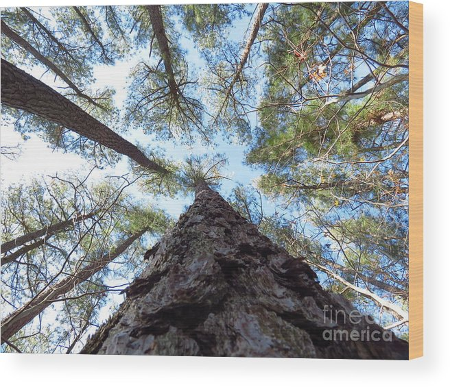 Trees Wood Print featuring the photograph Looking up by Rrrose Pix
