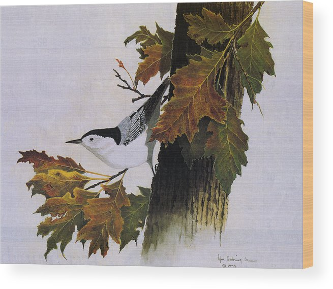 Bird Wood Print featuring the painting White-breasted Nuthatch by Bill Gehring