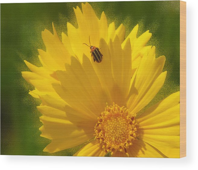 Floral Wood Print featuring the photograph Lady Bug Lookout by Paul Anderson