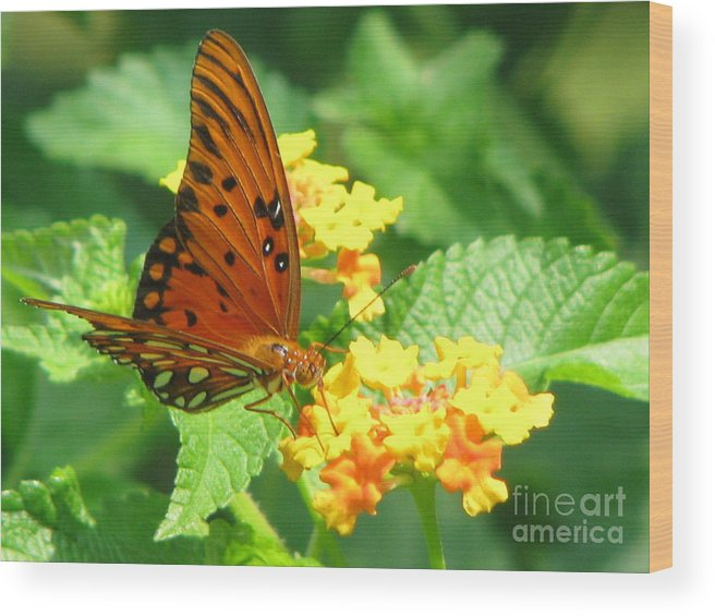 Butterfly Wood Print featuring the photograph Butterfly by Amanda Barcon