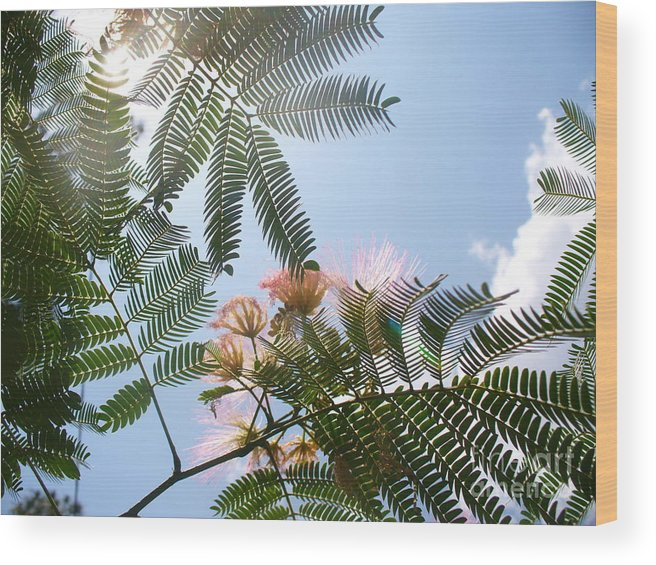 Flower Wood Print featuring the photograph Above by Stephanie Richards