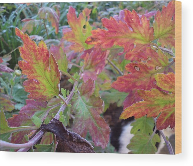 Landsacpe Wood Print featuring the photograph Autumn Leafs by David Du Hempsey