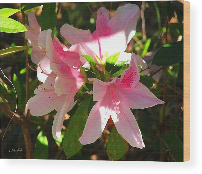 Pink Wood Print featuring the photograph Azalea's in Bloom by Judy Waller