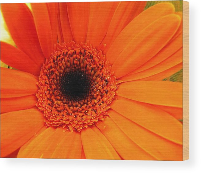 Flower Wood Print featuring the photograph Bright Red by Rhonda Barrett
