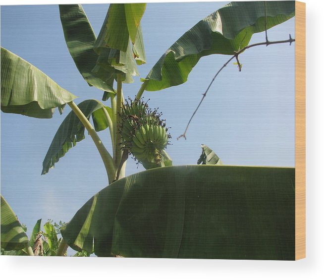 Wood Print featuring the photograph Dancing Of The Banana Tree 1 by GoodSiam Gallery
