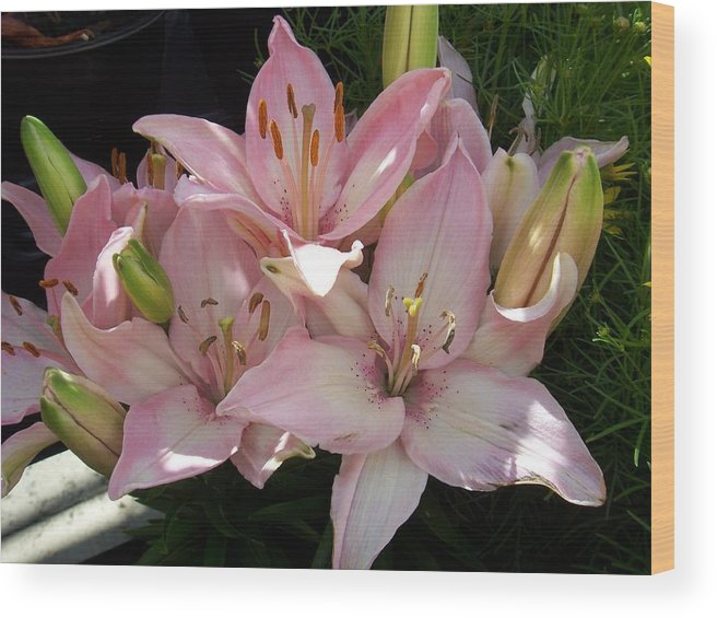 Lilly Wood Print featuring the photograph Dappled Pink Lillies by Ellen B Pate