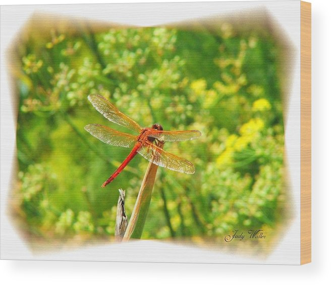 Dragon Fly Wood Print featuring the photograph Dragon Fly by Judy Waller