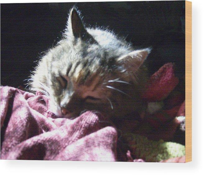 Cat Kitty Sleeps Cute Animal Wood Print featuring the photograph Elsa Sleeps Tonight by Lisa Roy