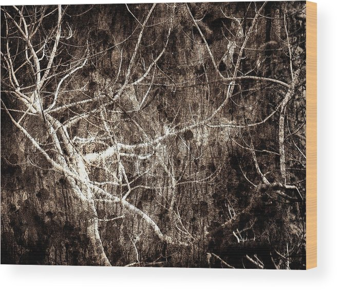Tree Wood Print featuring the photograph Endless by Gaby Swanson