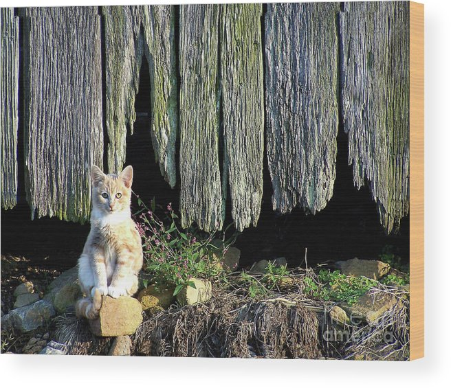 Cat Wood Print featuring the photograph Formal Portrait by Pete Hellmann