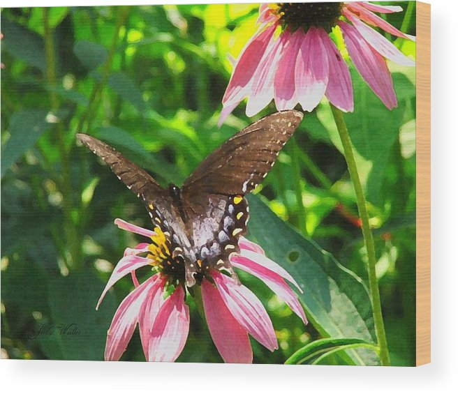 Butterfly Wood Print featuring the photograph In The Upper Garden - Two by Judy Waller