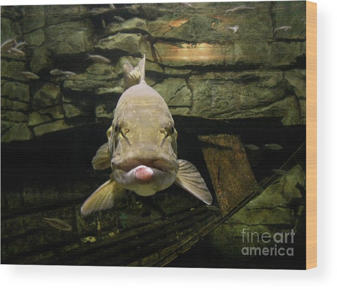 Fish Wood Print featuring the photograph Kiss Me You Fool by Donna Brown