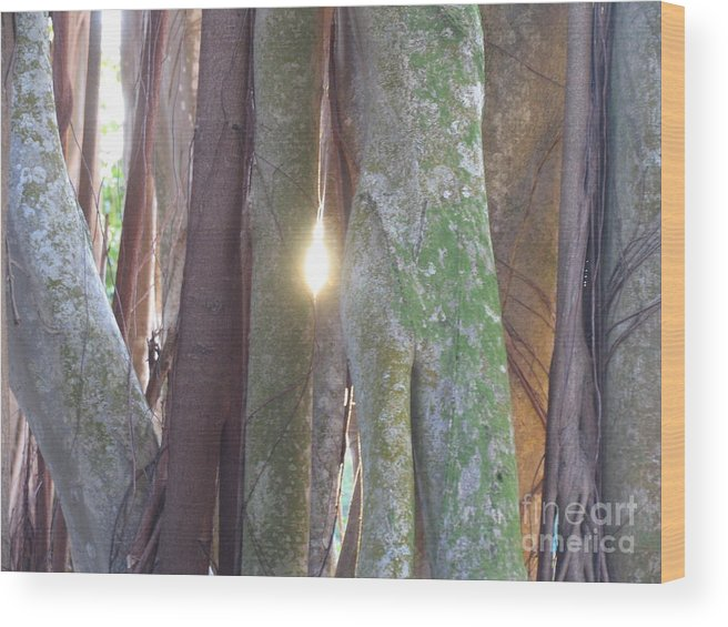 Tree Wood Print featuring the photograph Light by Stephanie Richards