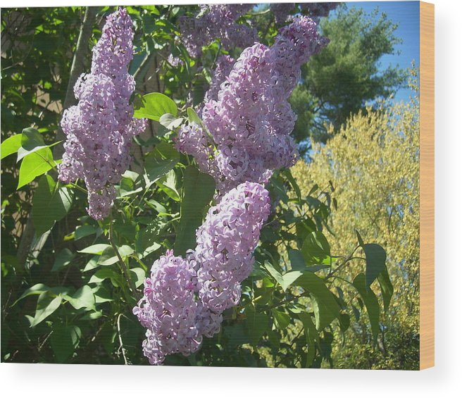Lilac Lilacs Florals Flowers Wood Print featuring the photograph Lilacs by Lisa Roy