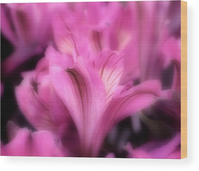 Lily Wood Print featuring the photograph Lily by Kenneth Krolikowski