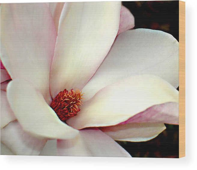 Floral Wood Print featuring the photograph Magnolia by Steve Karol