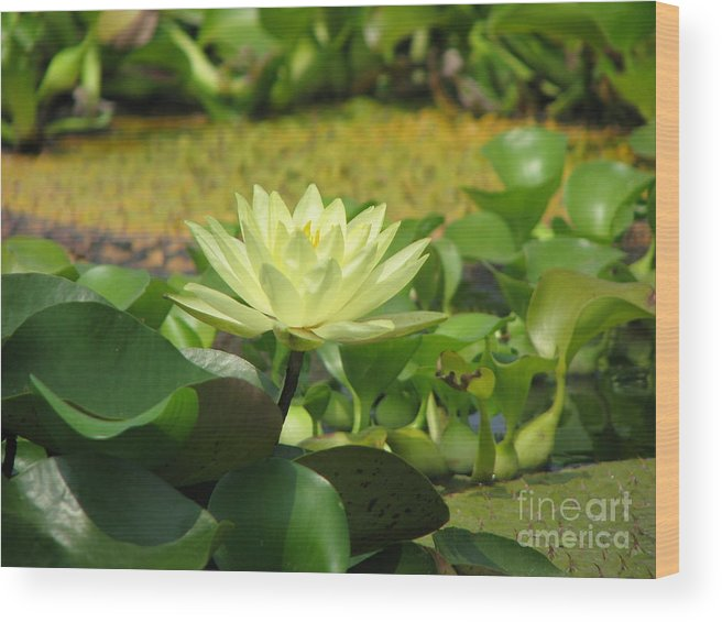 Nature Wood Print featuring the photograph Nature by Amanda Barcon