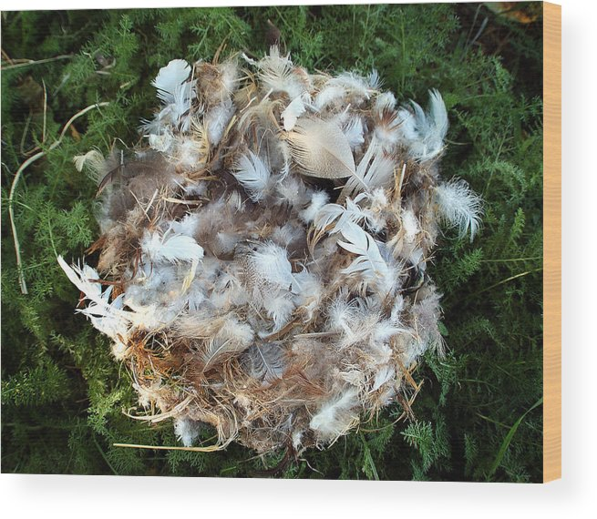 Stil Life Wood Print featuring the photograph Nest in Moss by Heather S Huston